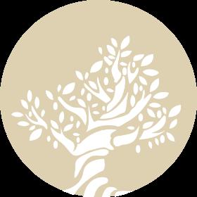 Olivo antico
