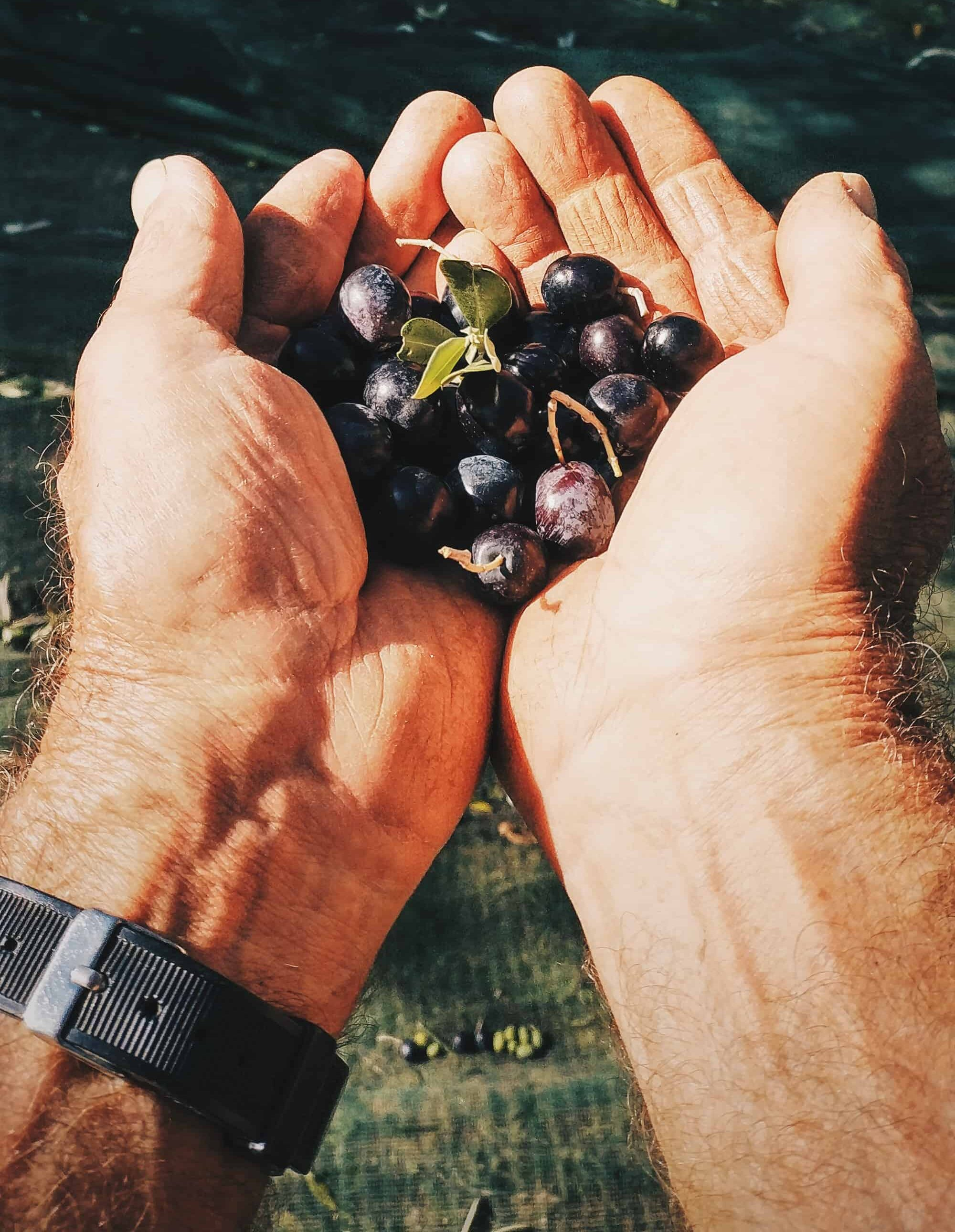 EVO olive oil and industrial oil: what are the differences?